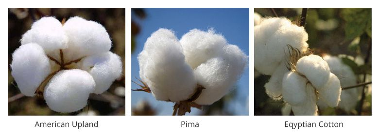 Cotton Fibres Jpg
