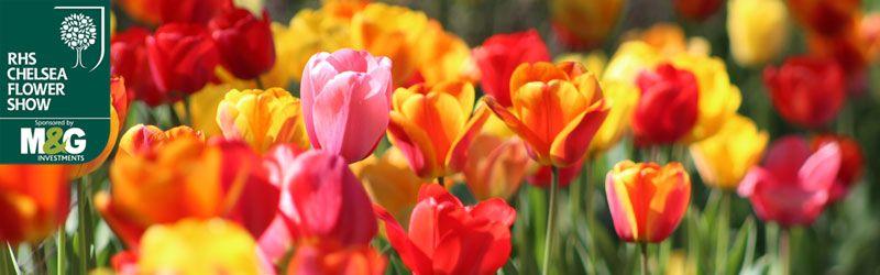 chelsea florals