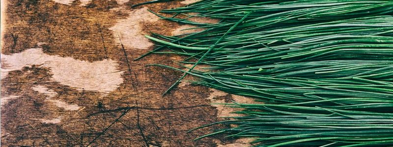 herbs-cooking-chives