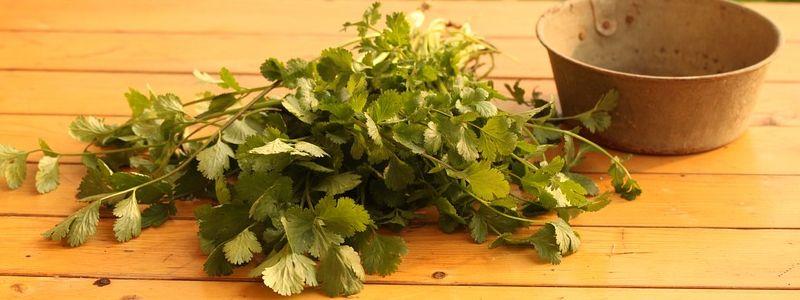 herbs-cooking-coriander