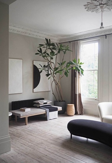 grey living room with dark grey sofa and a large, ceiling high house plant